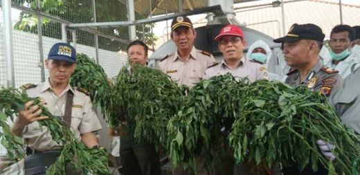 Yusril: Petani Cina Tanam Cabai Berbakteri di Bogor Adalah Infiltrasi untuk Runtuhkan Ekonomi Indonesia, BIN Harus Turun Tangan
