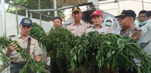 Cabai Berbakteri yang Ditanam WN China di Bogor Ternyata Sangat Berbahaya...