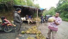 Mari Berburu, Durian di Pangkalan dan Piladang Mulai Panen