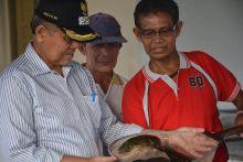 Pembudidayaan Ikan Sidat Jadi Sumber Ekonomi Baru di Kota Padang, Anda Berminat?