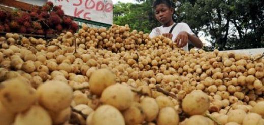 Wah... Petugas Kebersihan Kota Padang Kumpulkan 5 Ton Kulit Lansek Tiap Hari