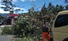 Angin Kencang Tumbangkan Belasan Pohon di Padang, Ada yang Menimpa Rumah
