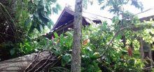 Tiga Rumah di Tanjung Raya Agam Rusak Ditimpa Pohon