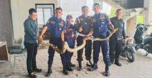 Piton Sepanjang 4 Meter Ditemukan di Basement Hotel Kyriad Bumi Minang