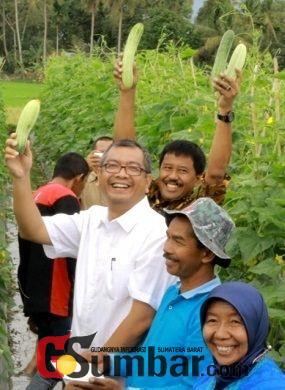 Komoditi Sayuran di Payakumbuh Mempunyai Prospek Cukup Cerah