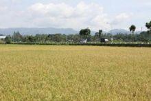 Pertanian Payakumbuh Terbaik di Sumatera Barat