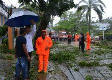 84 Pohon Pelindung Tumbang, Wako Padang: Warga Agar Tidak Membakar Sampah di Bawah Pohon