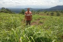 Pesantren di Agam Kembangkan Serai Wangi di Lahan Seluas 10 Hektare