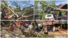 Angin Kencang di Padang, Sejumlah Mobil Tertimpa Pohon Tumbang