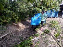 Nagari Gauang Solok Kekeringan, Petani Gagal Panen