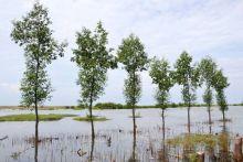 Berkunjung ke Pulau Bangau, Rumah Burung Bangau yang Tak Boleh Hilang di Kota Padang