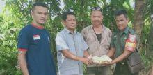 Teror Lebah Bikin Resahkan Warga 3 Nagari di Lubuk Alung, Sudah 10 Orang Kena Sengat