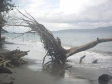 Abrasi di Pantai Batu Kalang Pesisir Selatan, 40 Meter Badan Jalan Tidak Bisa Dilewati Kendaraan