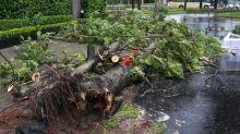 Tak Pulang-pulang, Disusul ke Kebun, Anak Temukan Ayah Tewas Dihimpit Pohon