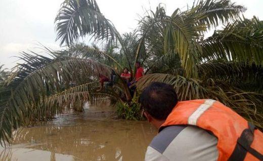 Banjir di Dharmasraya, Satu Bocah Meninggal, 327 Rumah Tergenang dan 300 Hektare Lahan Pertanian Rusak