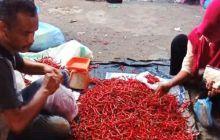 Pasca Lebaran, Harga Cabe Merah di Dharmasraya Masih Mahal hingga Rp60.000 Sekilo