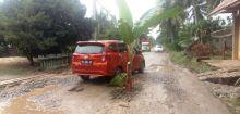 Jalan Lintas Provinsi yang Berlubang di Dharmasraya Ditanami Batang Pisang