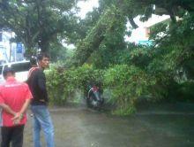 Hujan dan Angin Kencang Landa Padang, 3 Mobil dan 1 Motor Ditimpa Pohon Tumbang