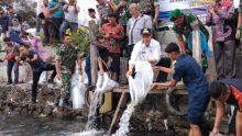 Cegah Kepunahan, Pemprov Sumbar Lestarikan Ikan Bilih di Danau Singkarak