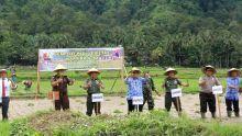 Tanam Padi di Pesisir Selatan, Danrem 032 Wirabraja Terget Produksi Padi Verietas Kartika 1-82 Mencapai 9 Ton/Hektar