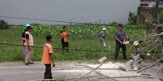 Diterpa Angin Kencang, 4 Pohon Tumbang di Padang, Timpa Mobil dan Robohkan Tiang Listrik