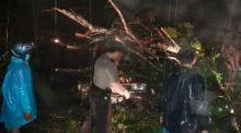 Diterjang Longsor, Pohon Tumbang Timpa Mobil di Batipuh