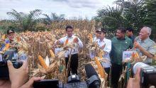 Canangkan Tanam Jagung 1 Juta Hektar, Mentan RI: Aparat Hukum Diminta Menangkap Penjual Bibit Palsu dan Pupuk Oplosan