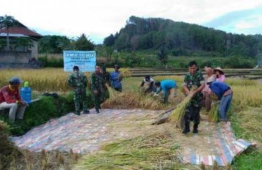 Dukung Swasembada Pangan, Kodim 0306/Limapuluh Kota Panen Padi Bersama Petani