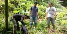Harimau Berkeliaran Dekat Permukiman di Lubukbasung, BKSDA Pasang Kamera Penjebak
